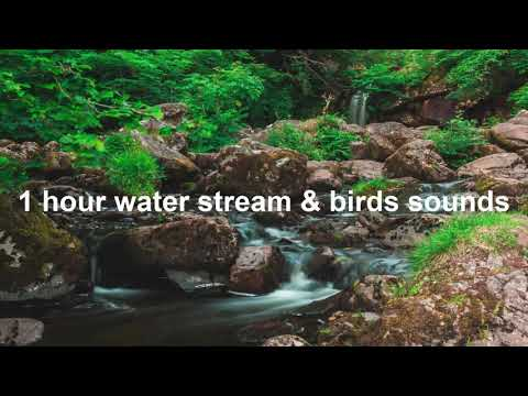 63 1 Hour Relaxing Soothing Sound Of Forest Gentle Flowing Water River Stream With Birds Sounds Youtube Soothing Sounds Water Nature Sounds
