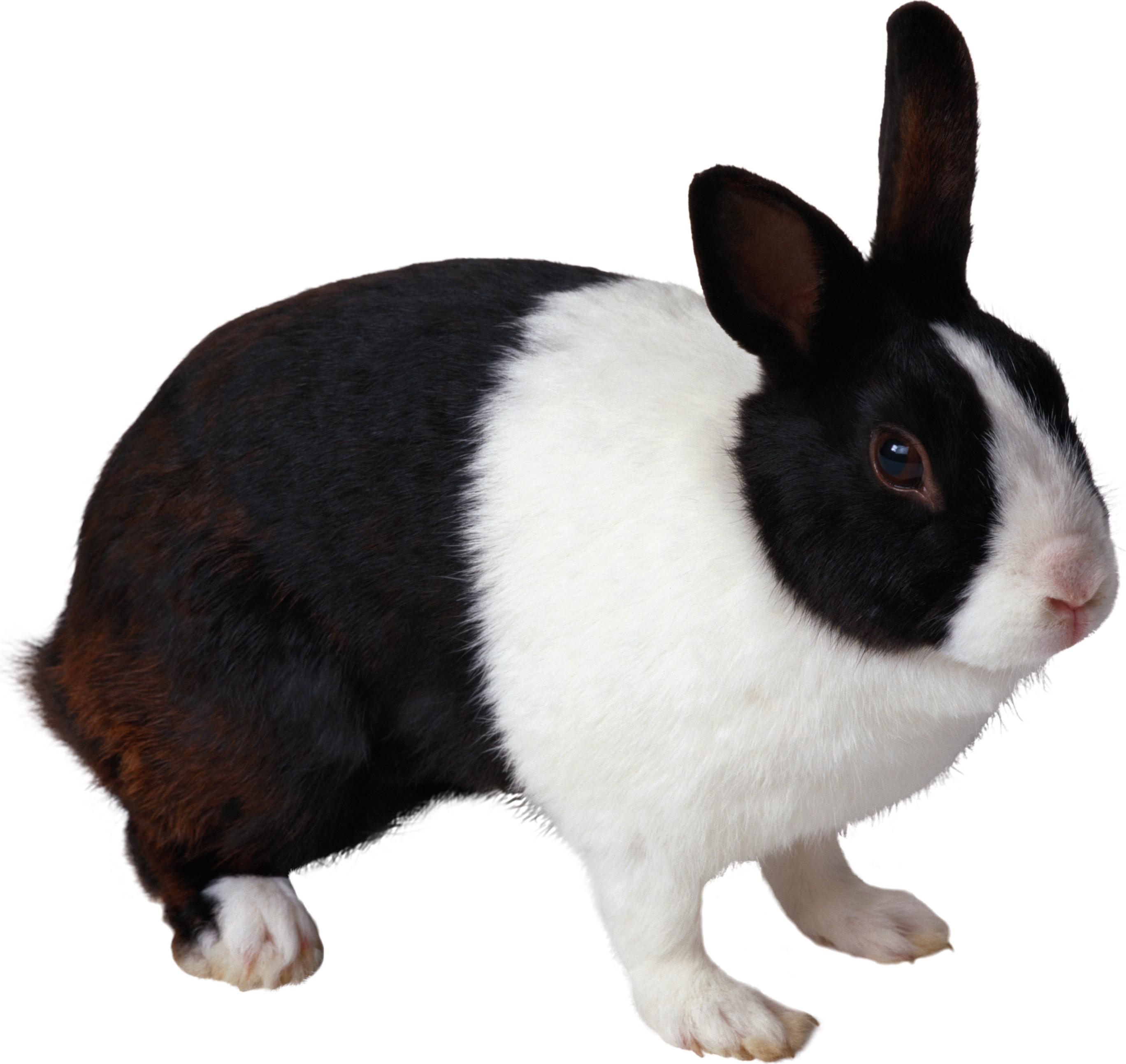 Rabbit Png Black And White Rabbit Rabbit Png Rabbit