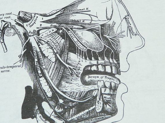 Gray's Anatomy 827 Illustrations Art Drawings Bone Muscles ...