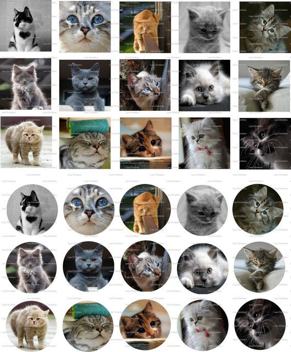 Cats Digital Collage 1 inch / 100 by LisaChristines on Etsy, $1.50