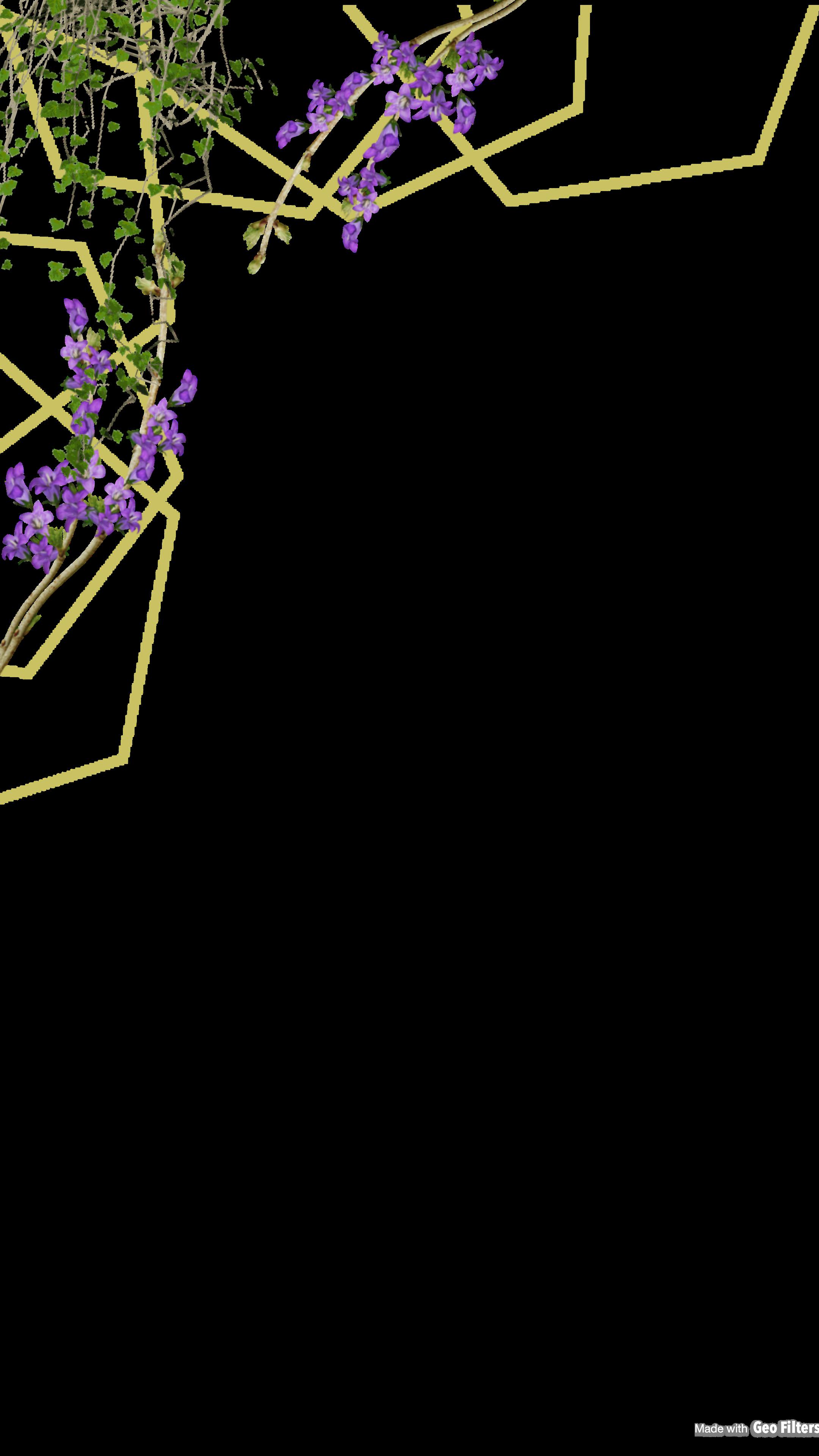 فلتر من تصميمي Wallpaper Backgrounds Flower Frame Background Pictures