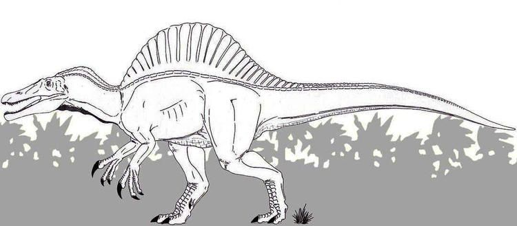 Best Spinosaurus Coloring Page Spinosaurus Coloring Pages Pokemon Coloring Pages