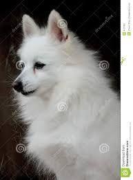Image result for white dog