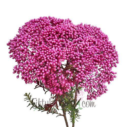 Pink Rice Flower Stem 350 7a7a23ec
