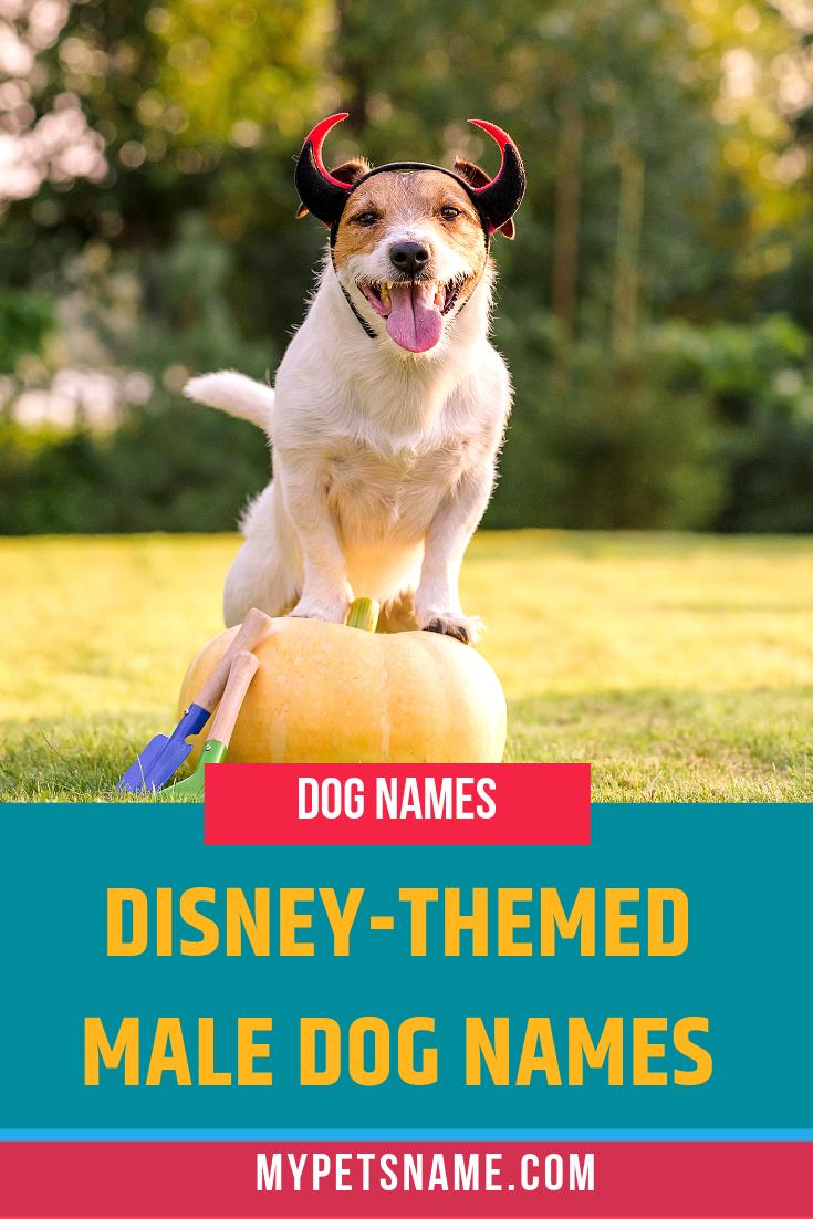 Male Disney Dog Names In 2020 Dog Names Disney Pet Names Disney Male Names