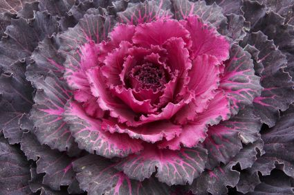 10 Flowers to Plant Right Now - Articles :: Networx