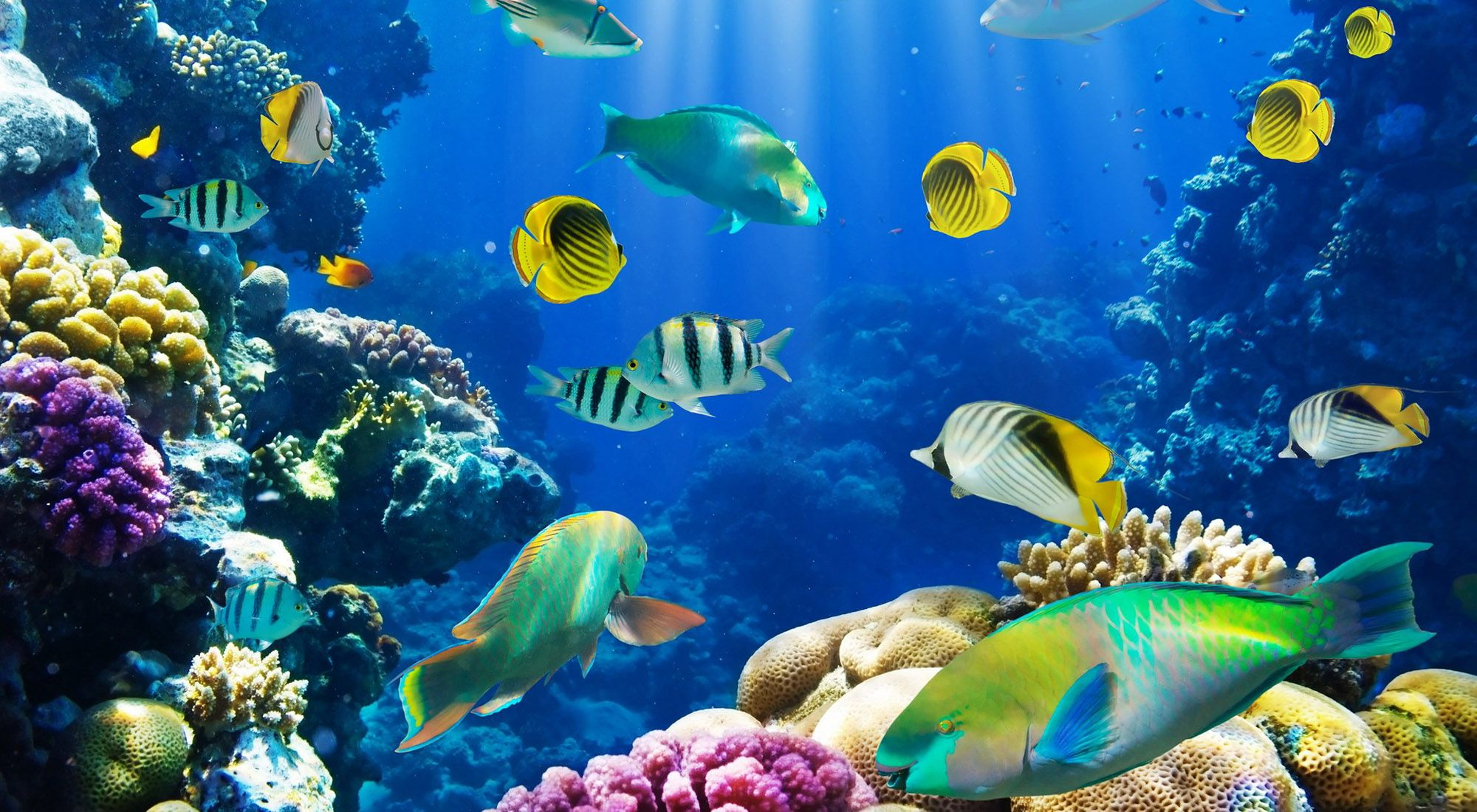 Hd fish wallpapers find best latest hd fish wallpapers in - Underwater desktop background ...