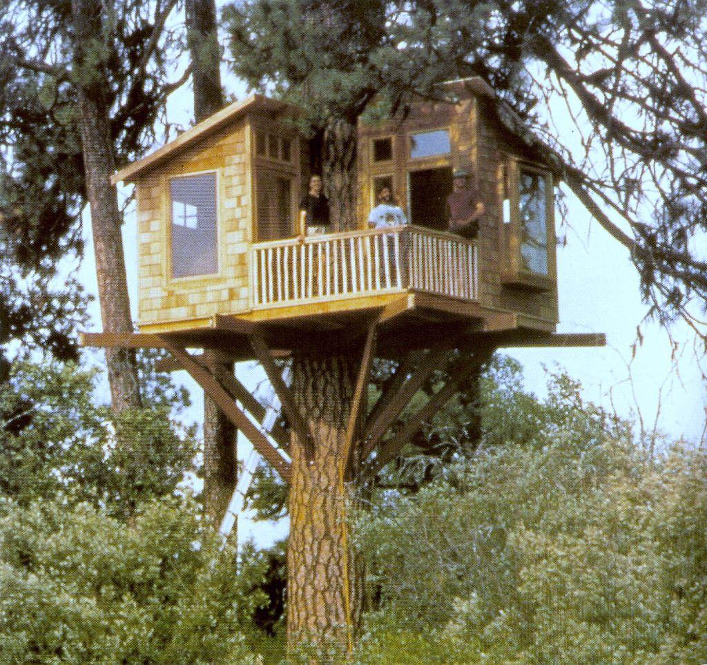 Casa Con Terraza Tree Houses Cool Tree Houses Woodland
