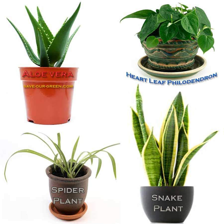 15 house plants to reduce pollution. eg. Spider Plant removes ...