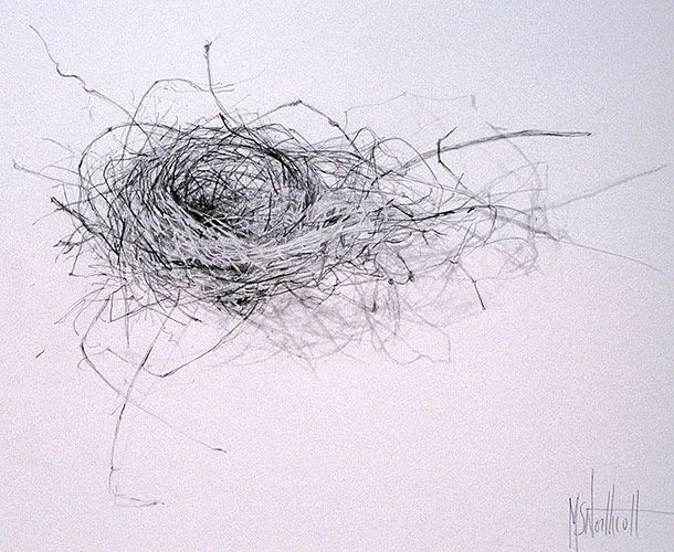 Line Drawing Nest : Little nest suzanne northcott graphite on paper