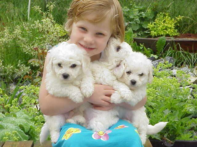 razas de perros pequeos para nios alergicos raza de perros pequeos para nios alrgicossi tenemos