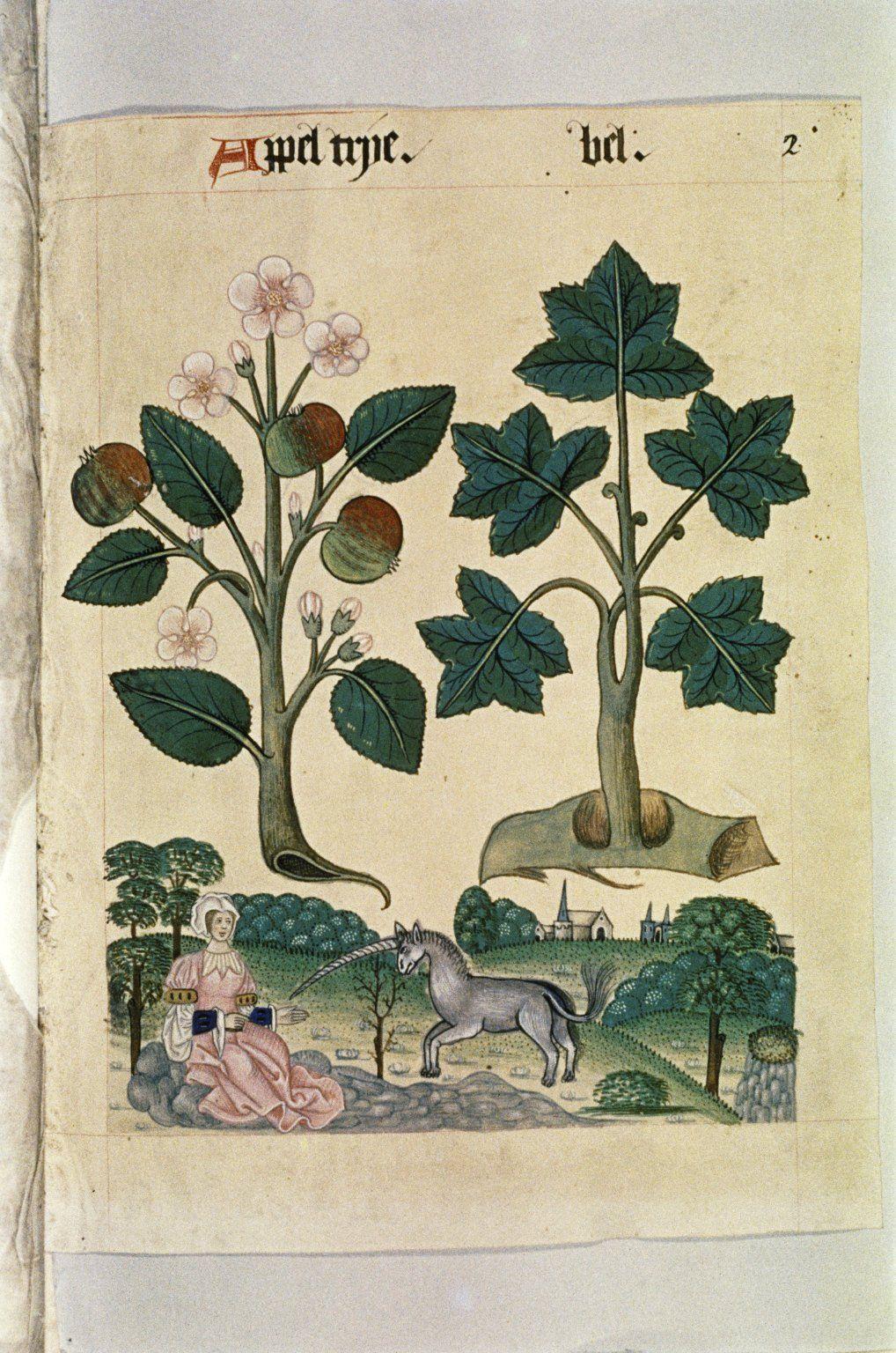 Tudor Herbal,1520 -