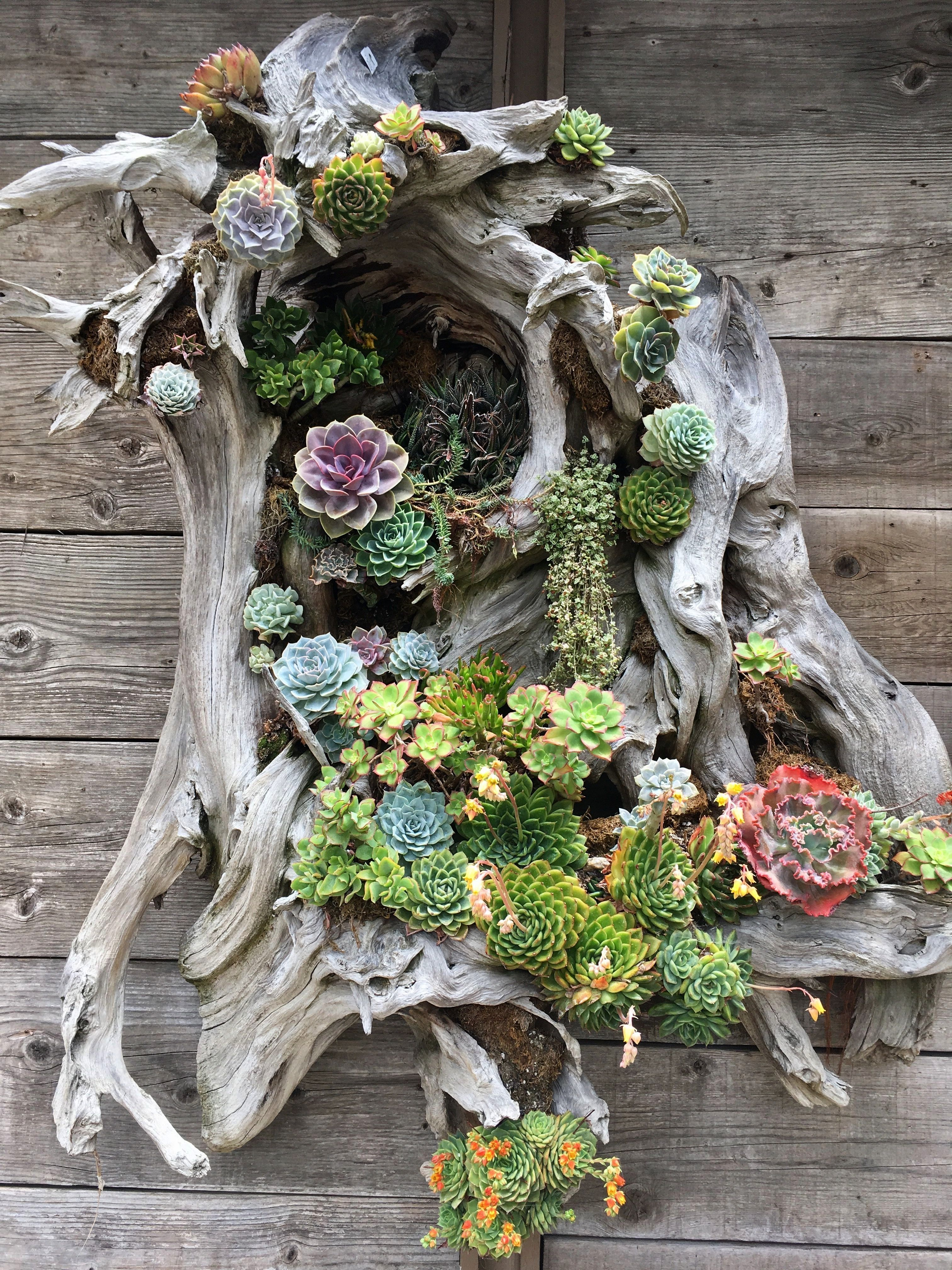 planters  free recycled pots and planters this is drift wood nailed together with sphagnum moss and succulents tucked in as wall artSucculent planters  free recycled pots...