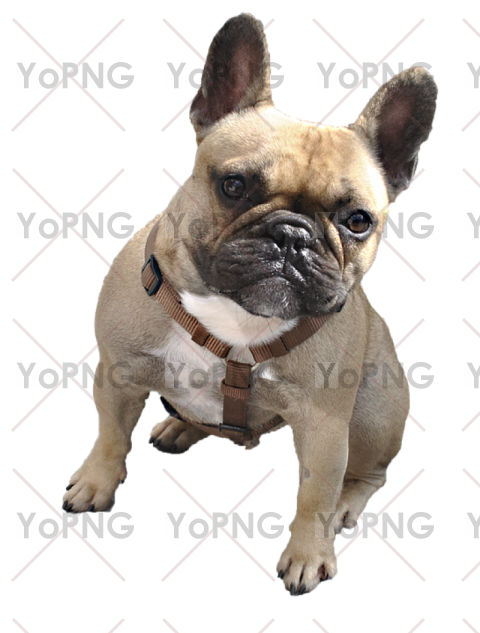 Bull Dog Png Image Free Download For Design Png Images Bulldog Dogs