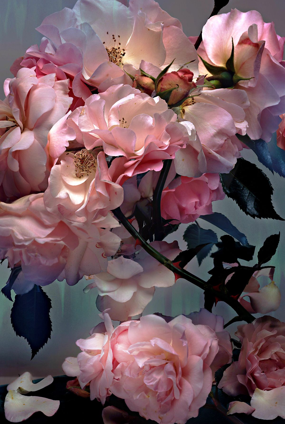 robertocustodioart Roses by Nick Knight 2008 Nick absolutely museum