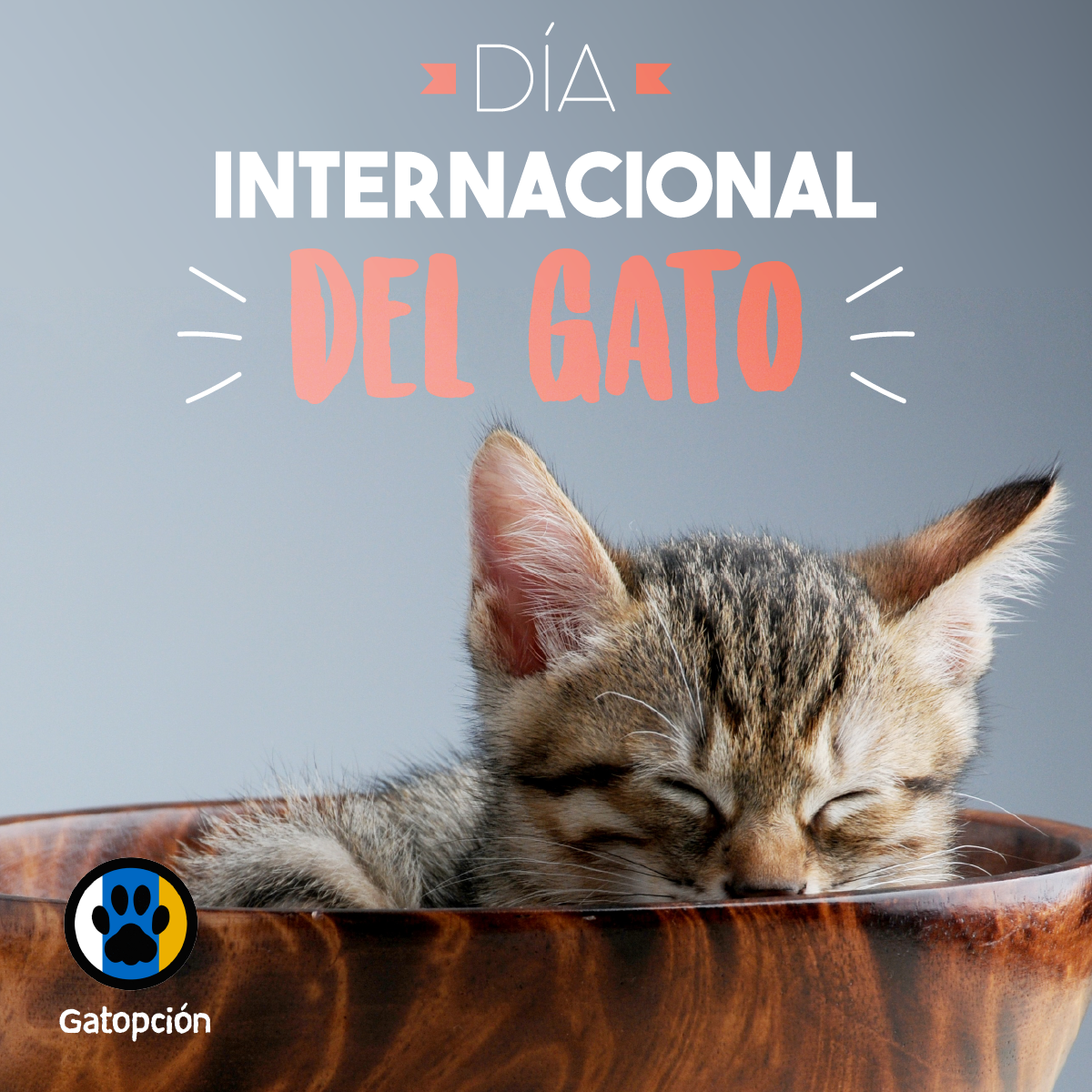 Imágenes Día del Gato Internacional World Cat Day Socks Bill Clinton juntos