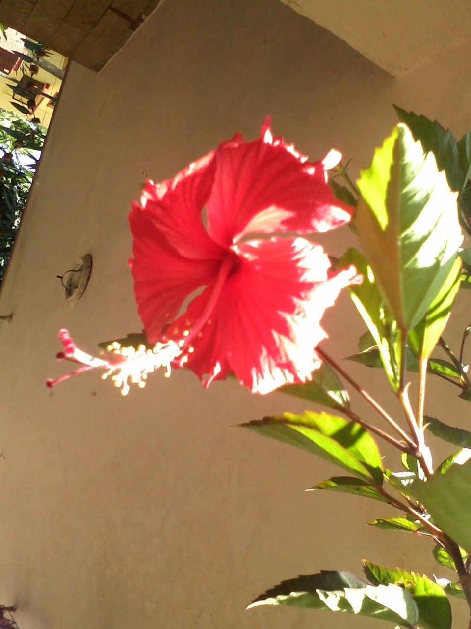 The Red Hibiscus Is The Flower Of The Hindu Goddess Kali And Appears Frequently In Depictions Of Her In The A Beautiful Blooms Hindu Worship Beautiful Flowers