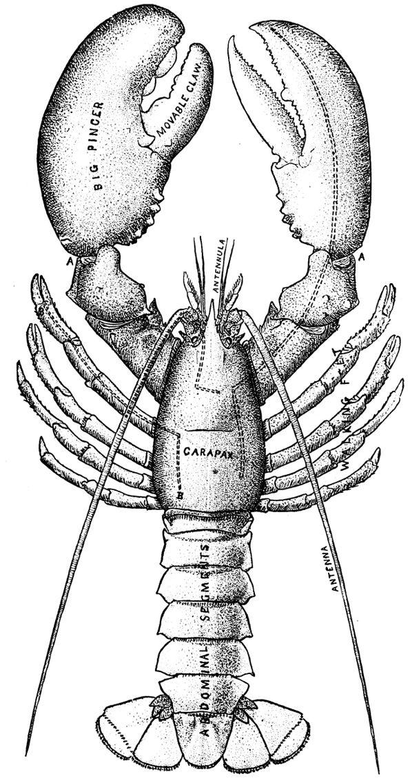 Lobster Watercolor Print Lobster Art Print Blue Lobster Lobster - dessin de maison a imprimer