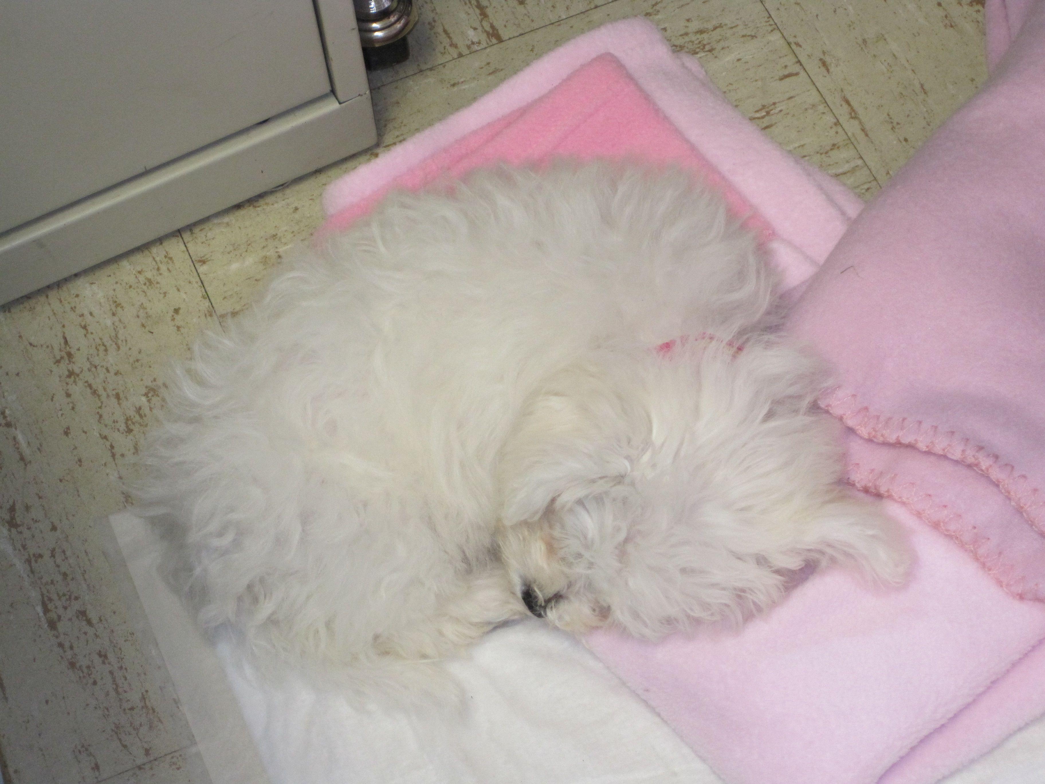 Babyzimmer Mia ~ Baby mia pets pinterest