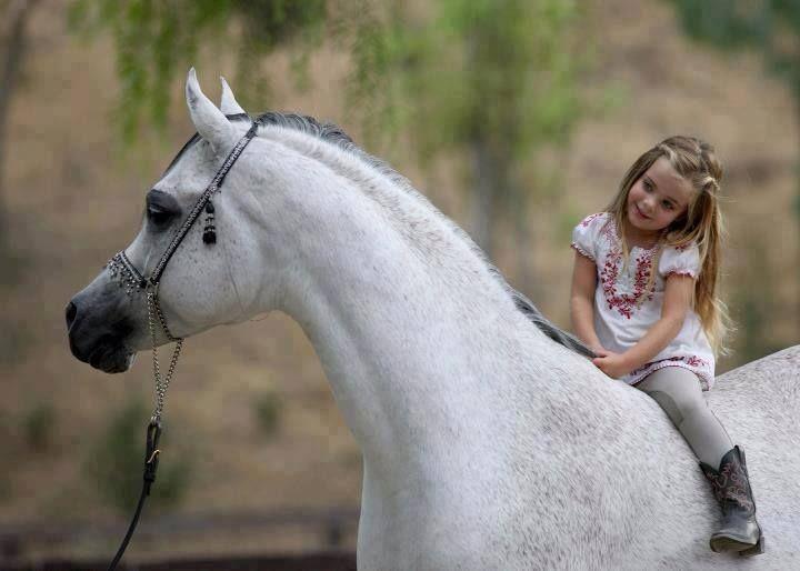 Pin by Lolo ❣ Kh on Kids with Horses - أطفال مع أحصنة | Horses, Arabian  horse, Majestic horse