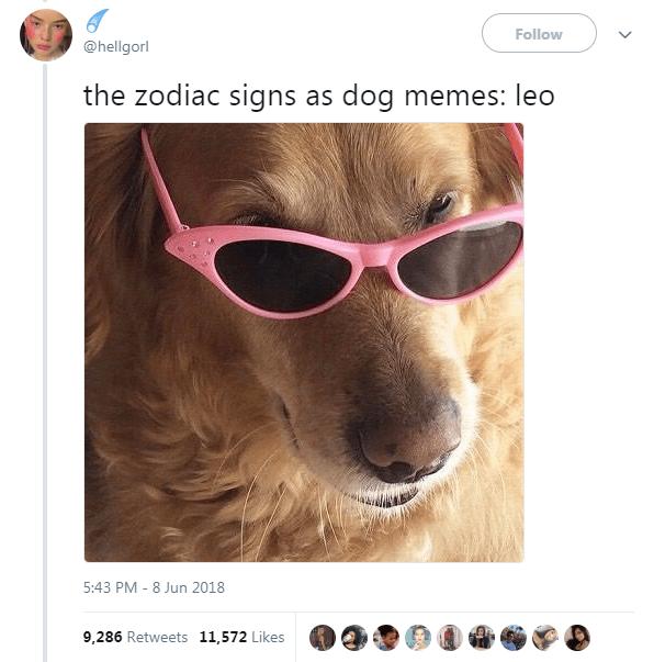 The 12 Zodiac Signs As Dog Memes Zodiac Signs Funny Zodiac Memes Zodiac