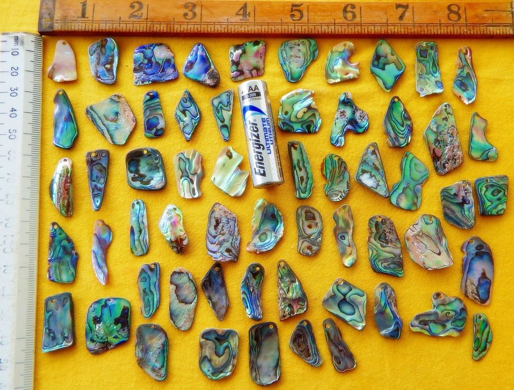 New Zealand Paua/Abalone, 50 + Drilled Shell Pieces