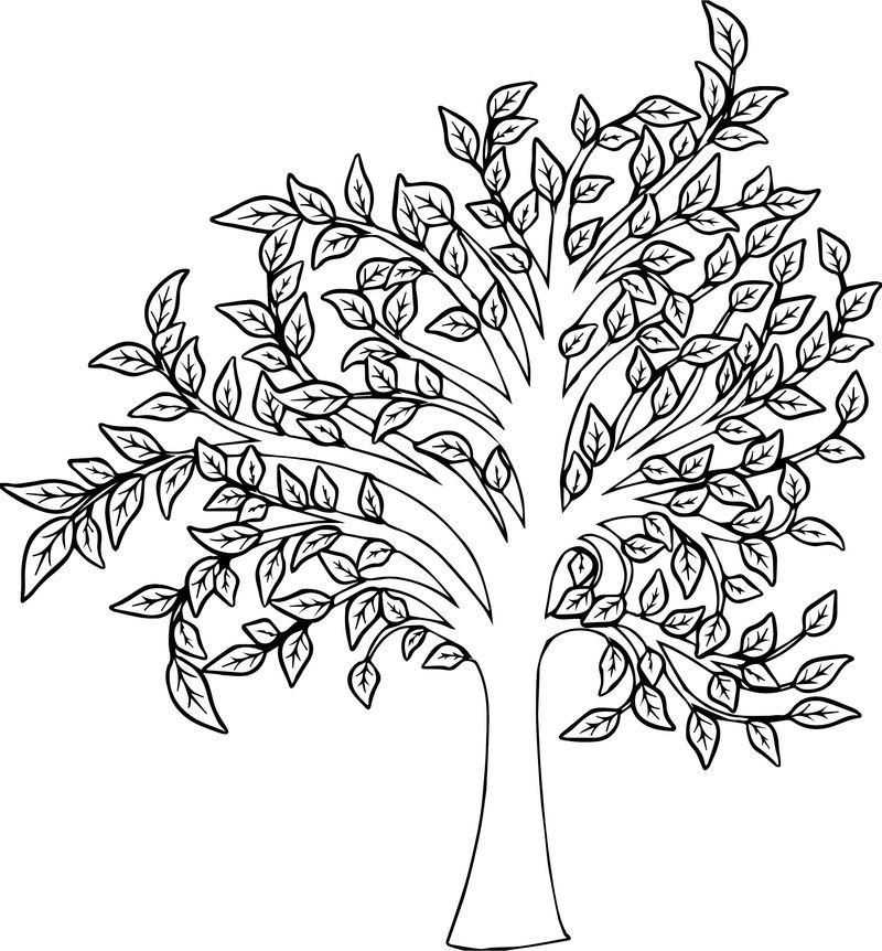 Beautiful Fall Tree Coloring Page See The Category To Find More