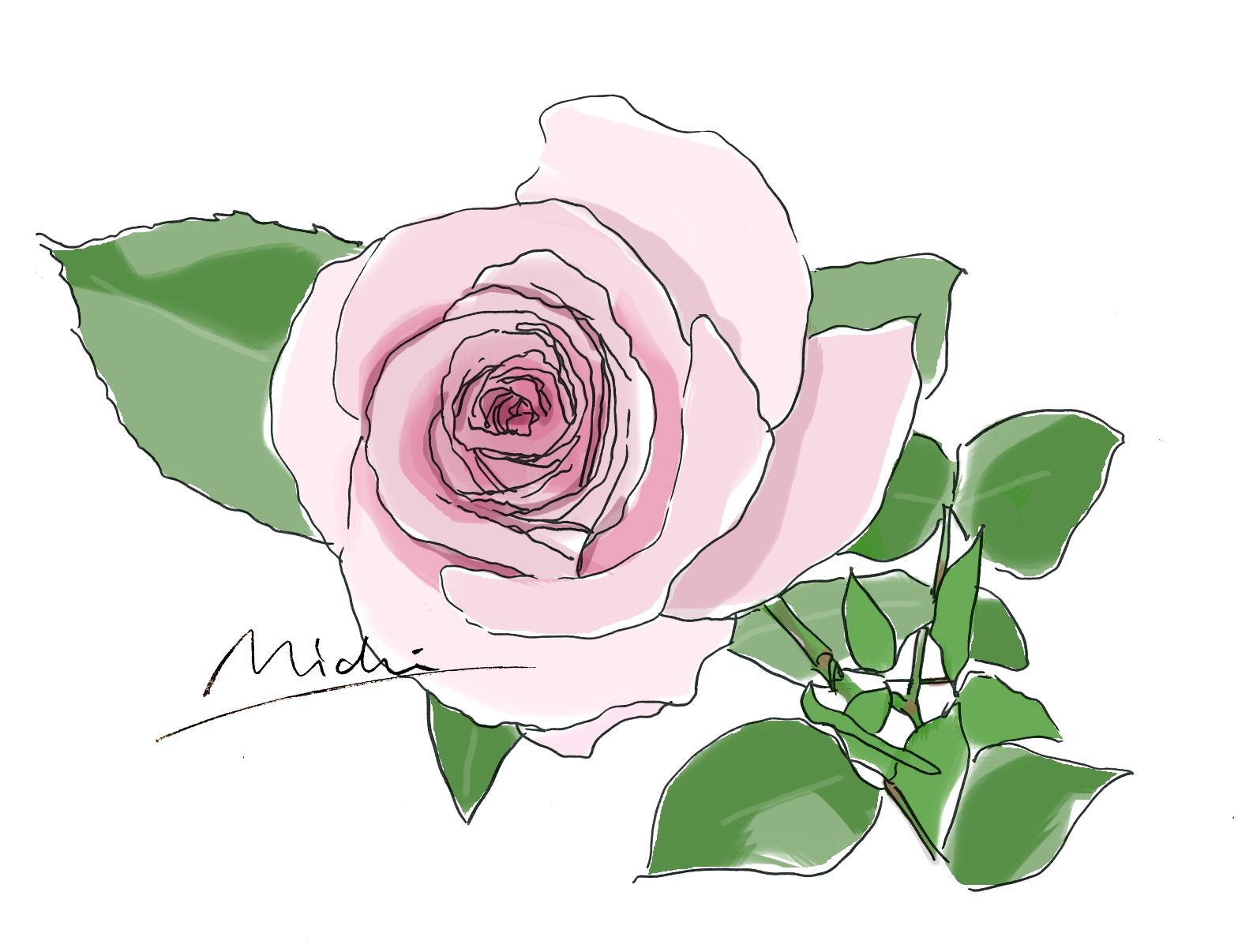 バラ 薔薇 ローズ Rose Herbs Botanical Croquis Illustration ファッションイラスト Aloma Flower 花 水彩画 花のスケッチ ラベンダー イラスト
