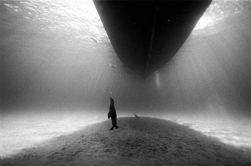 photo -  David Doubilet