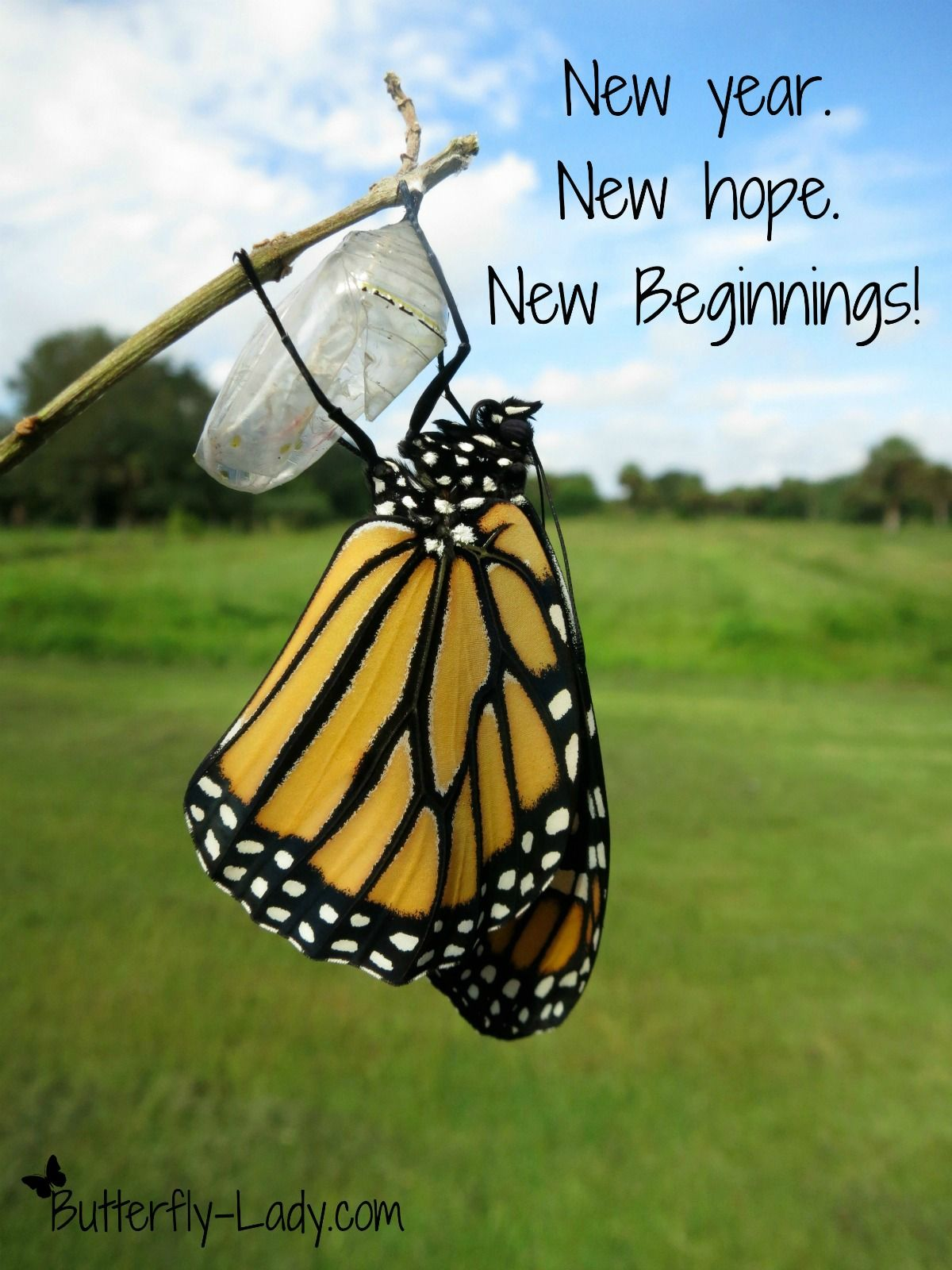 Just like the butterfly we can start a new life