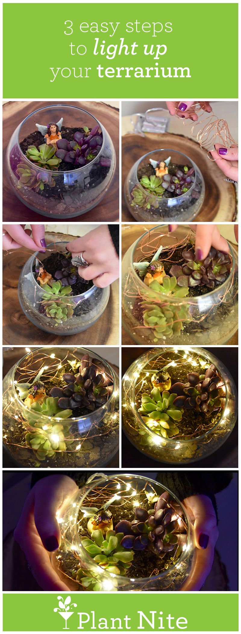 things to do with your plant nite terrariums terraria and plants