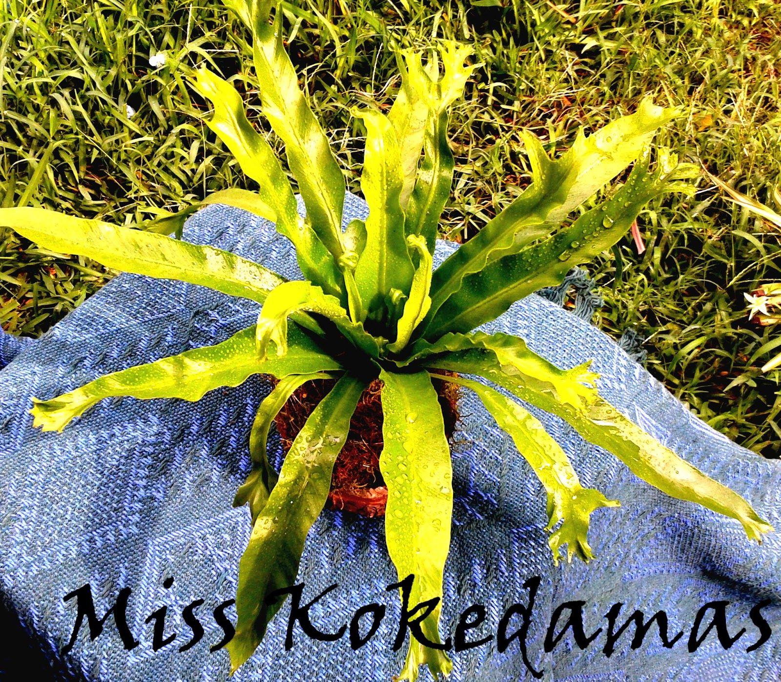 Miss kokedamas plantas decorativas de interior en macetas lugares para visitar - Plantas decorativas interior ...