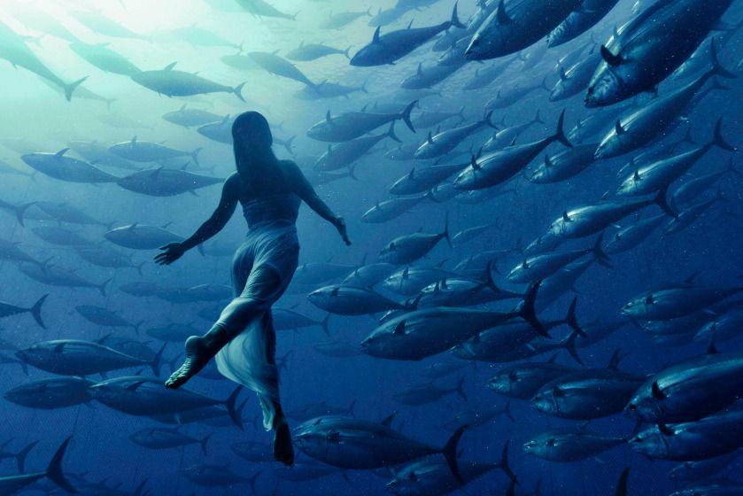 Mermaid Swims With Tuna Underwater Photography Underwater Photos Cool Photos