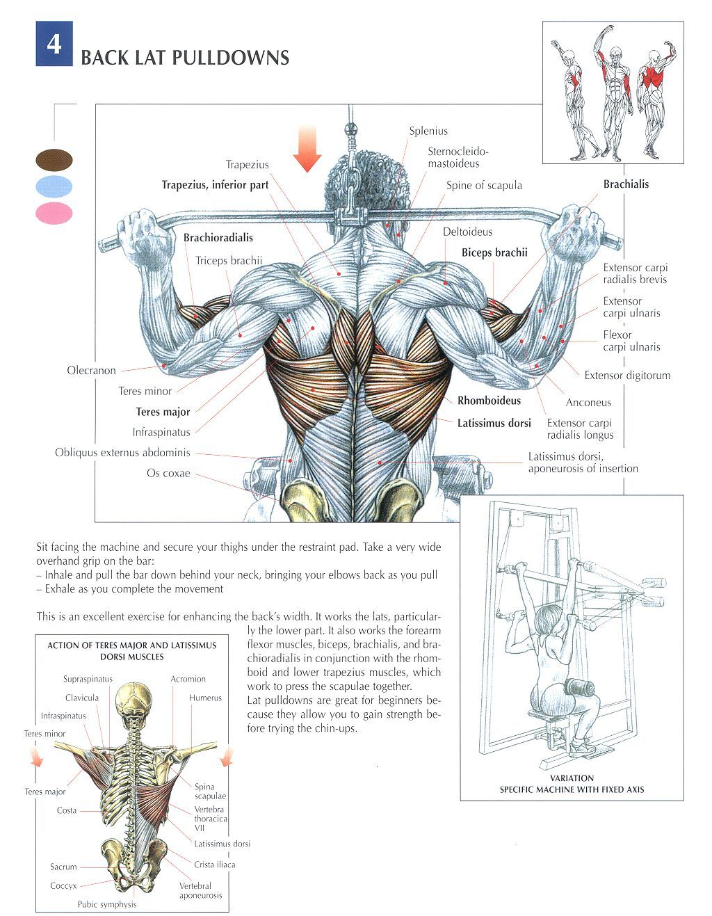 5 Great Back Exercises To Build A Back Of Steel | Business Board ...