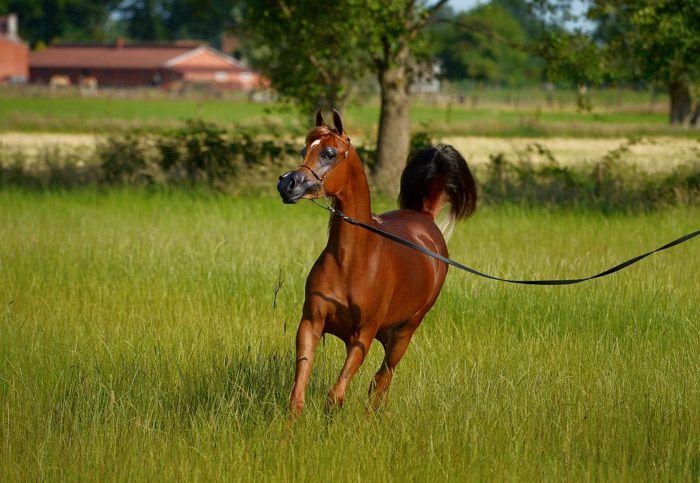 الخيل في القرآن Horses Arabian Horse Arabians