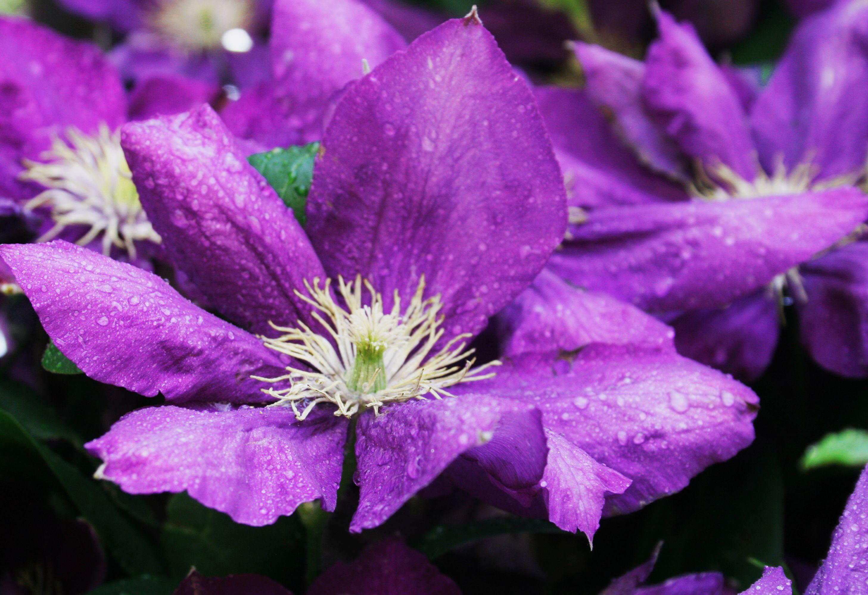 Purple flowers flowers pinterest