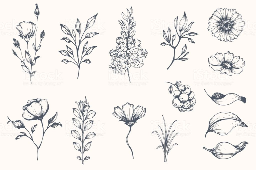 Vector collection of hand drawn plants. Botanical set of sketch ...
