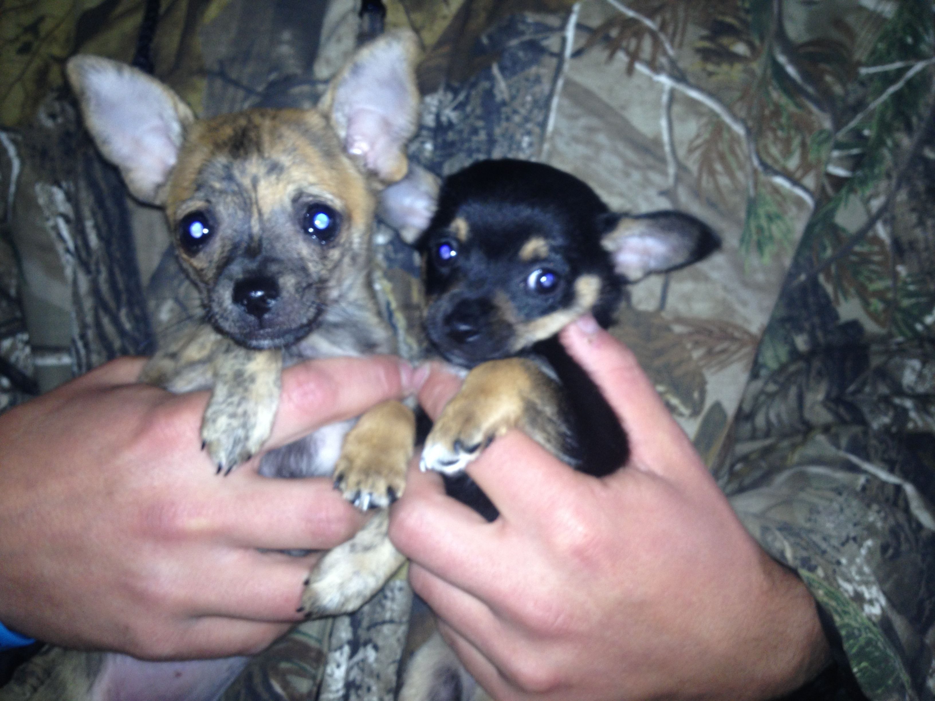 Bambi And Her New Boyfriend Bambam Best Dog Breeds