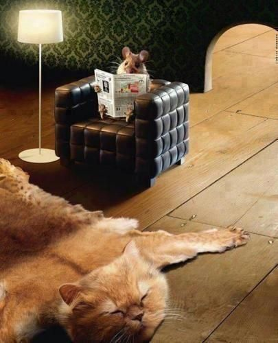 ~♥~Better Homes & Mice -- love the rug!!