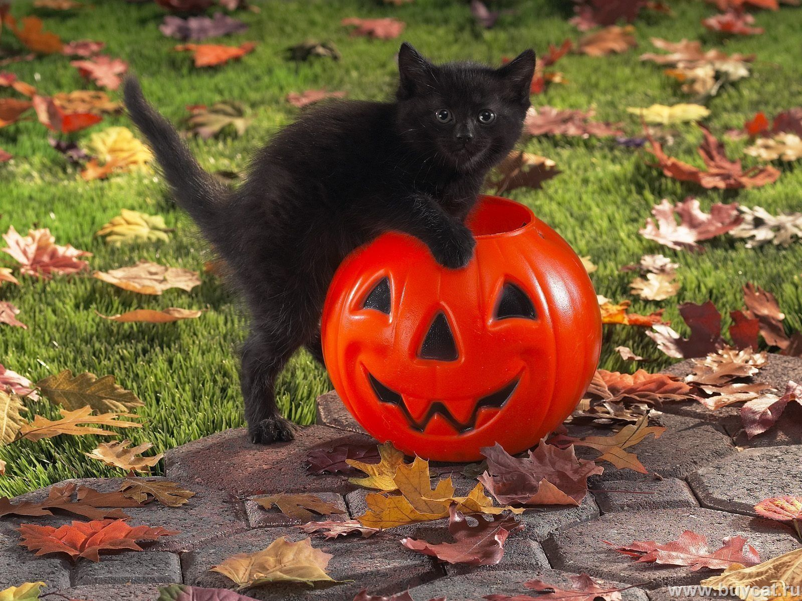 Black Cat Celebrates Halloween Cat Celebrating Cute Black Cats Cute Cats And Kittens