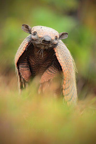Foto Ondrej Prosicky Unusual Animals Weird Animals Nature Animals