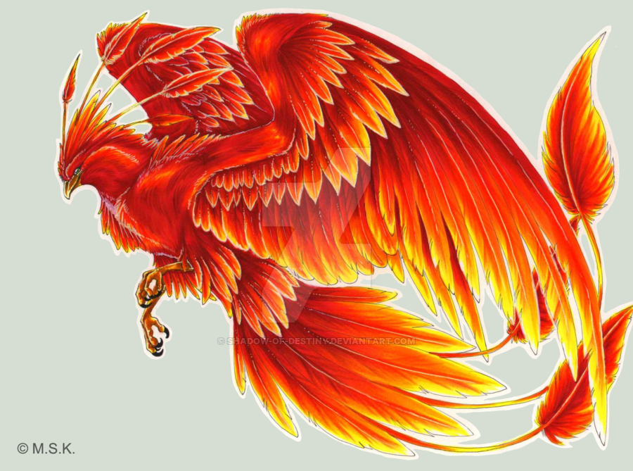 Phoenix tattoo design. People asked for a phoenix and so I drew this Funfunfun ---- Seeing as this is my design, I would very much appreciate it if people would not use this as their own tattoo wit...