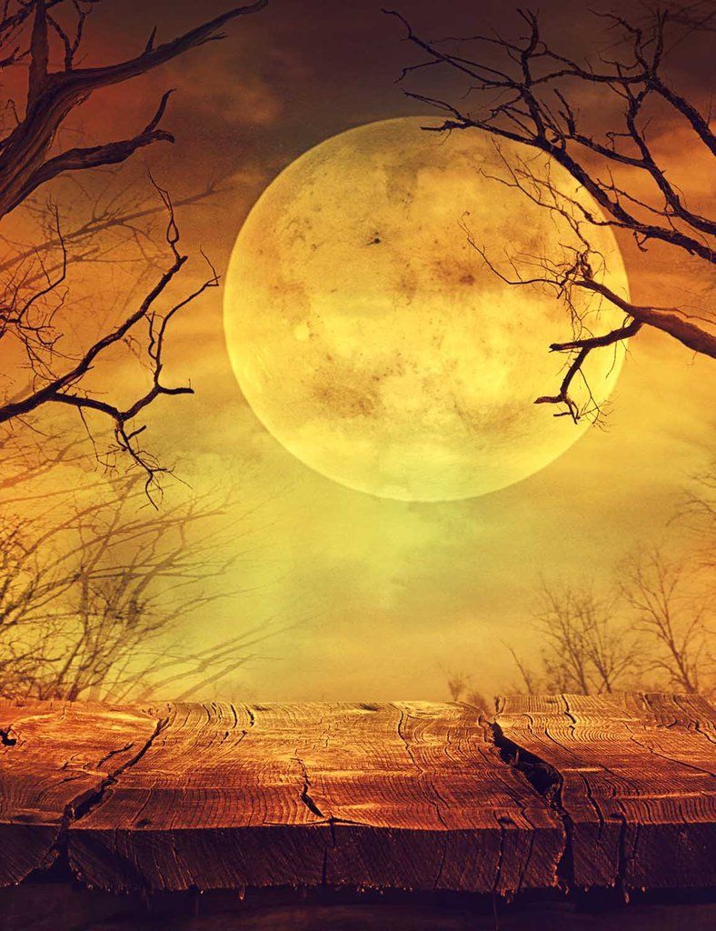 Halloween Background With Ball Moon Photography Backdrop