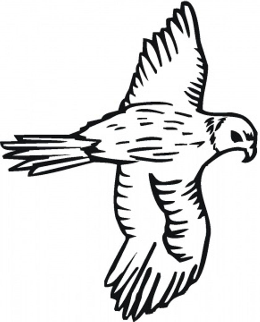 bird to color bird coloring pages free falcon Falchi