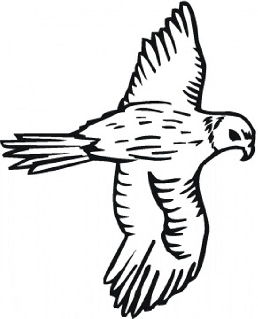 bird to color bird coloring pages free falcon applique