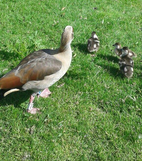 I saw cute ducks :)
