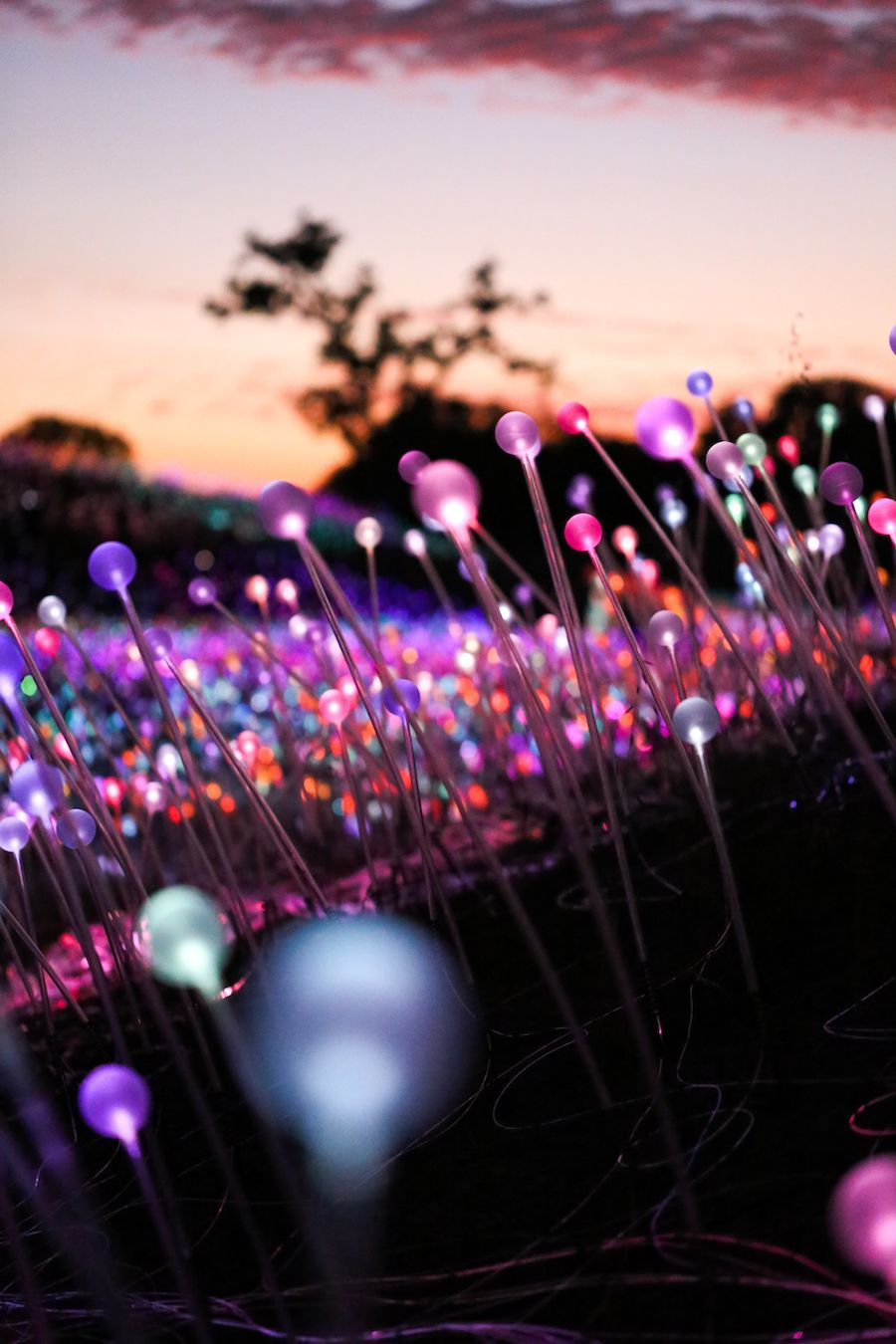 Magical Field of Light Art Installation
