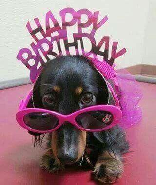 Funny Happy Birthday Dachshund Pictures |Weiner Dog Birthday Memes