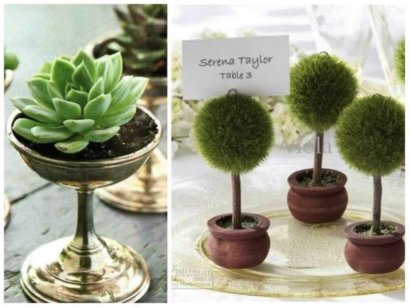 14+ Succulent wedding favors singapore ideas