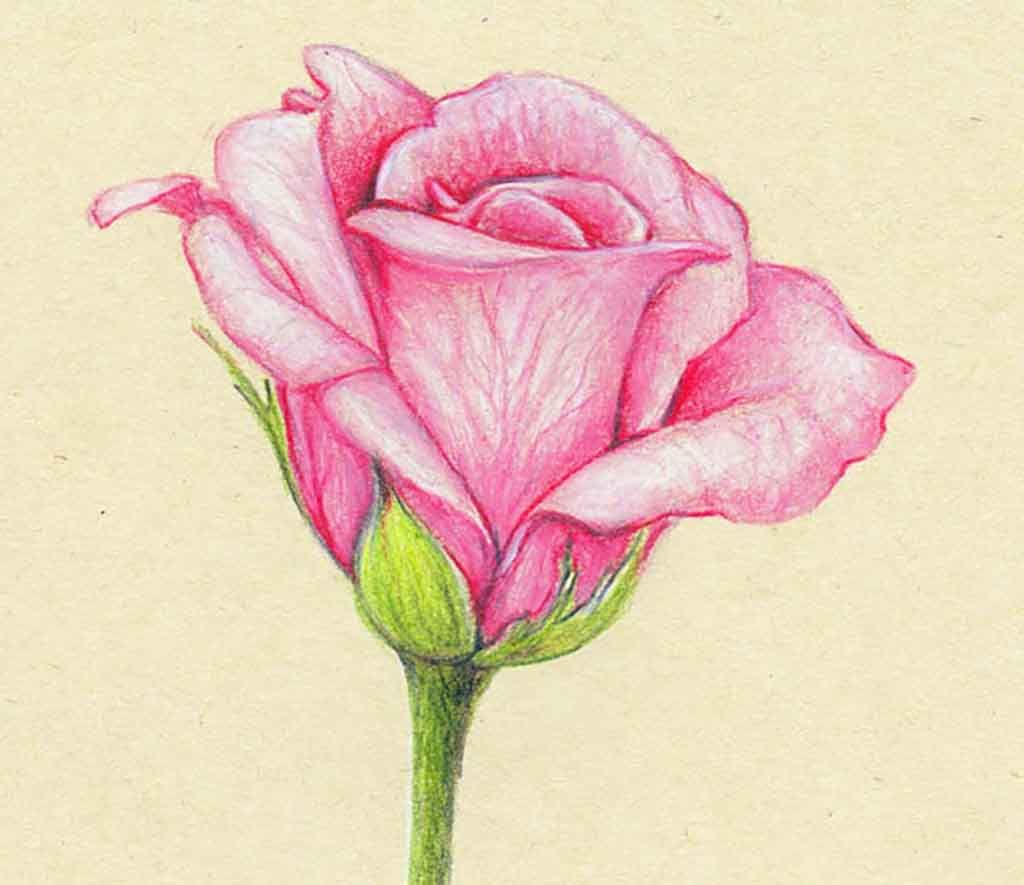 30 Beautiful Flower Drawings Cuded Flower Drawing Beautiful Flower Drawings Roses Drawing